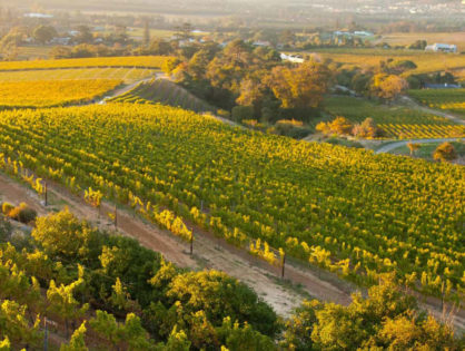 Klein Constantia vineyard replicates a historic sweet sticky wine